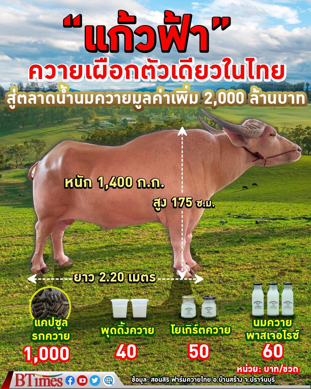 แก้วฟ้า ควายเผือกตัวเดียวในไทย จาก สอนศิริฟาร์มควายไทย สร้างมูลค่าได้มากกว่า 2,000 ล้านบาท
